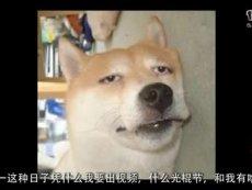 【动漫碎碎念】第26期——火影完结特刊
