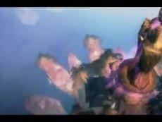 3D飞行空战修仙网游 《吞噬苍穹》今日开测!