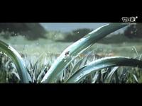 《寒霜朋克》正式版宣传视频